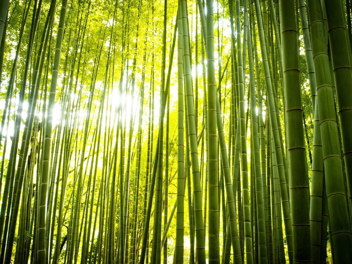 определенный картинки бамбук для телефона символизирует справедливость