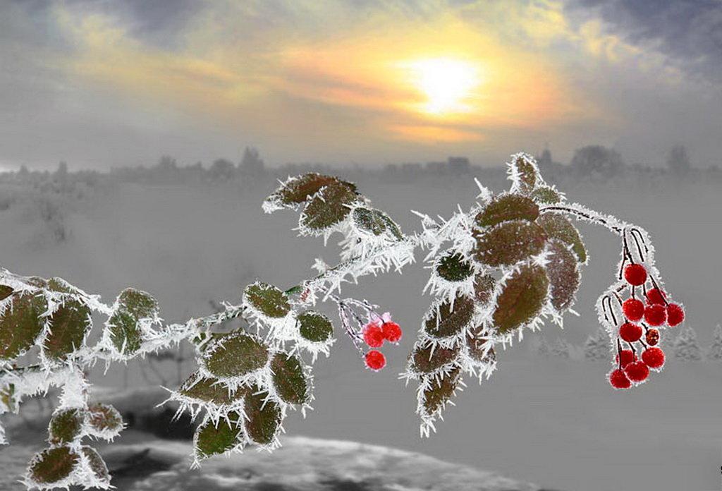 Разукрасилась зима: на уборе бахрома Из прозрачных льдинок, звездочек-снежинок.