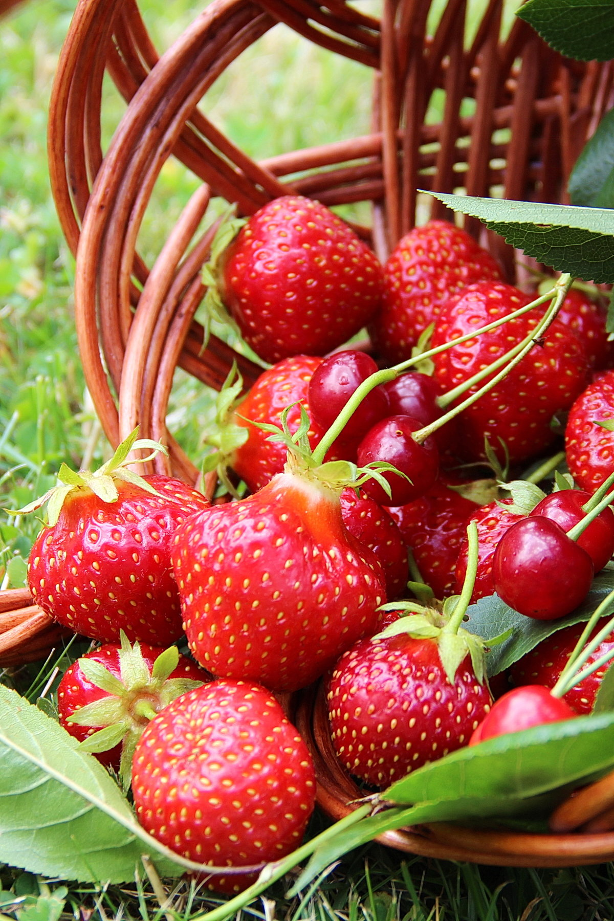 фасоли летние ягодки картинки донки