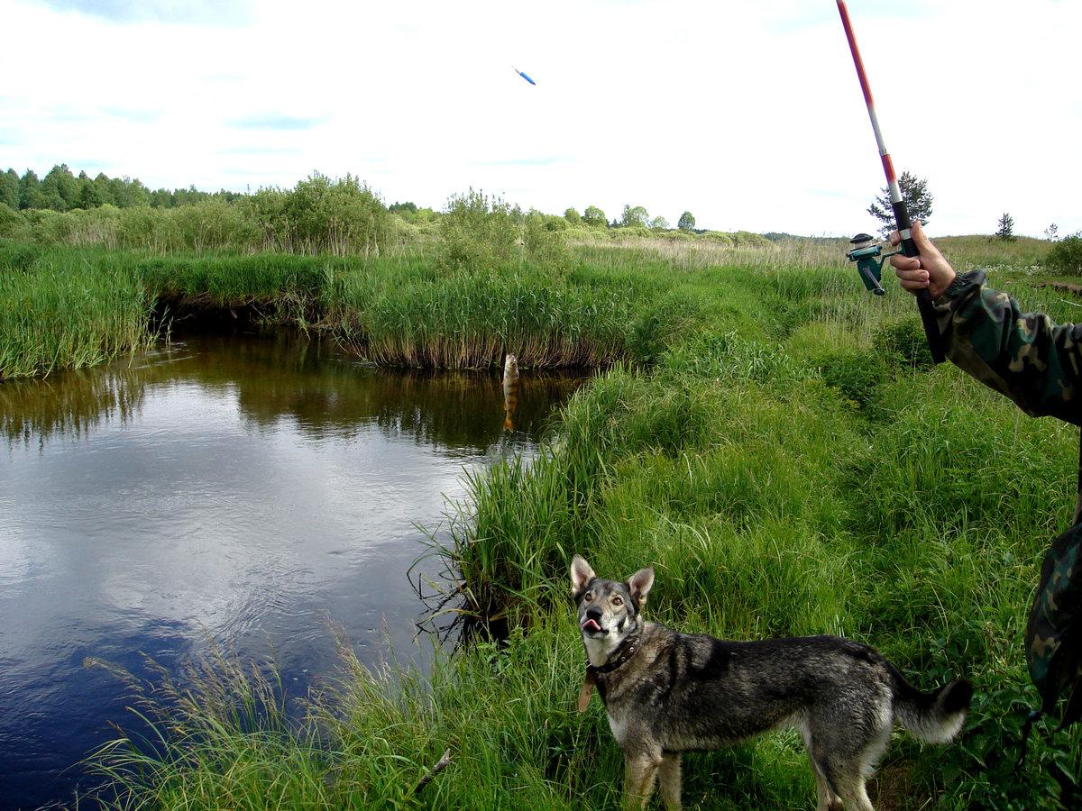 Фото собак сенбернаров самые крупные это