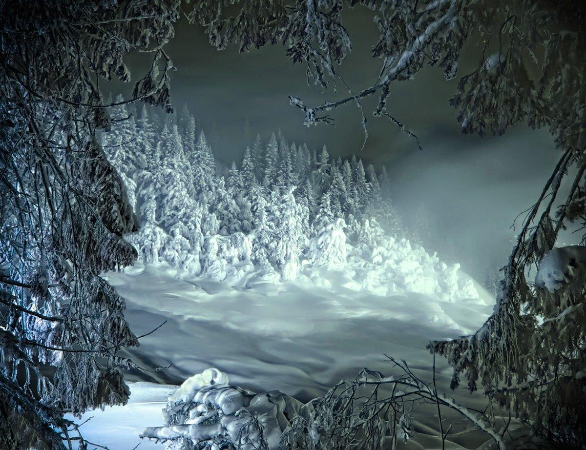 гвардиола лес зимой и сказка фэнтези фото для книжки