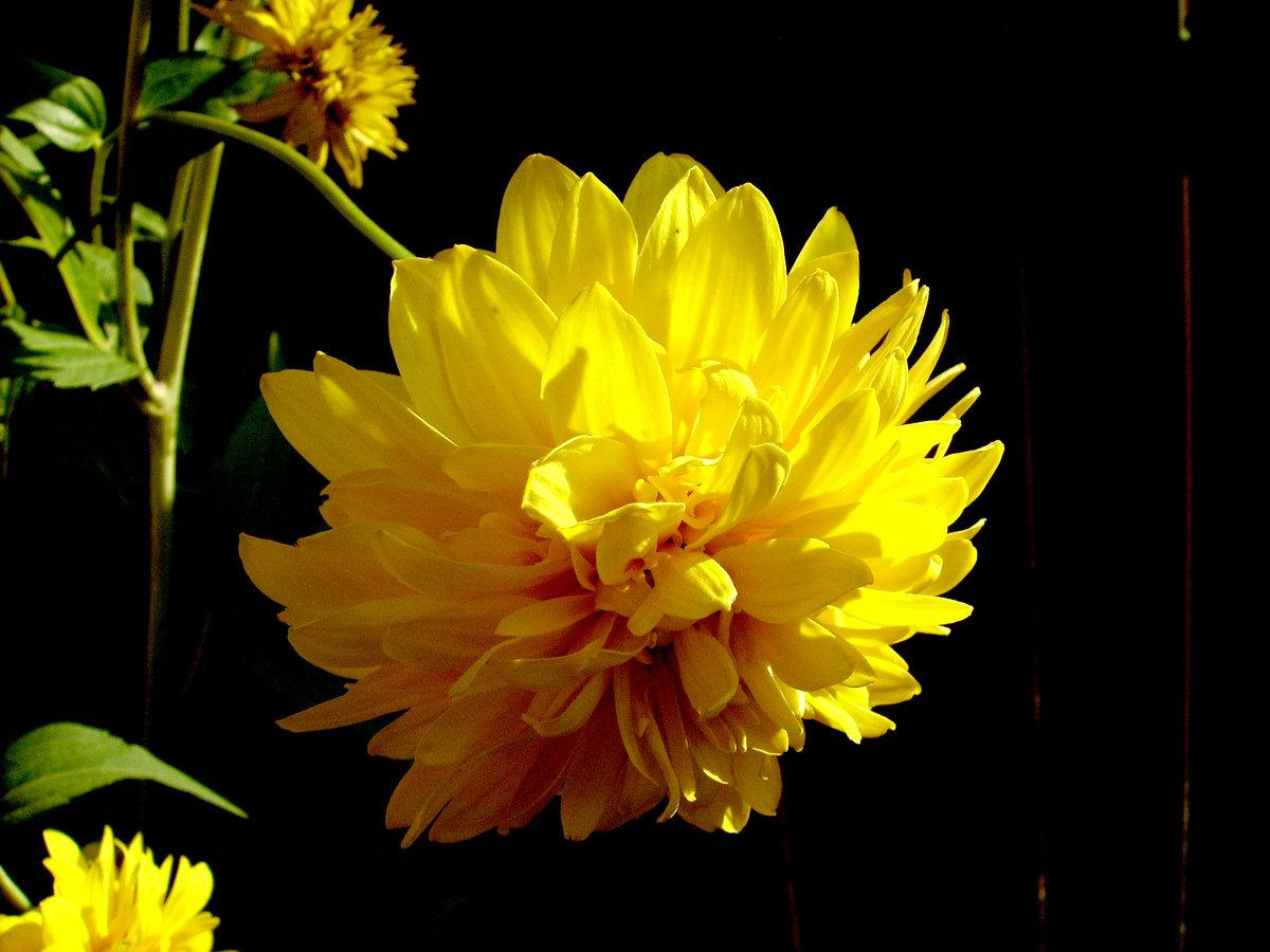 Смешные фото с цветами с днем рождения пусть