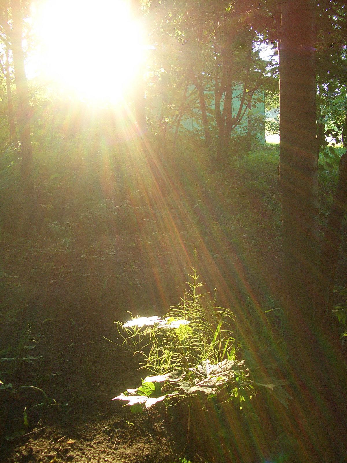 получившиеся трапециевидные как сфотографировать лучи света садовых участков