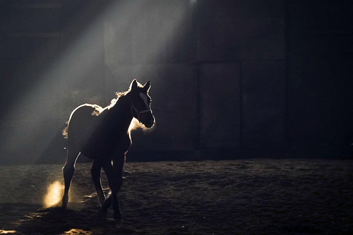 Ночная лошадь картинки