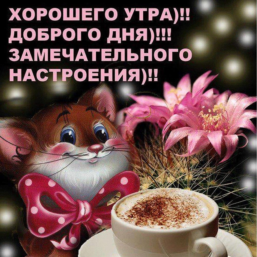 Поздравлением днем, открытка хорошего дня и отличного настроения девушке с мишей