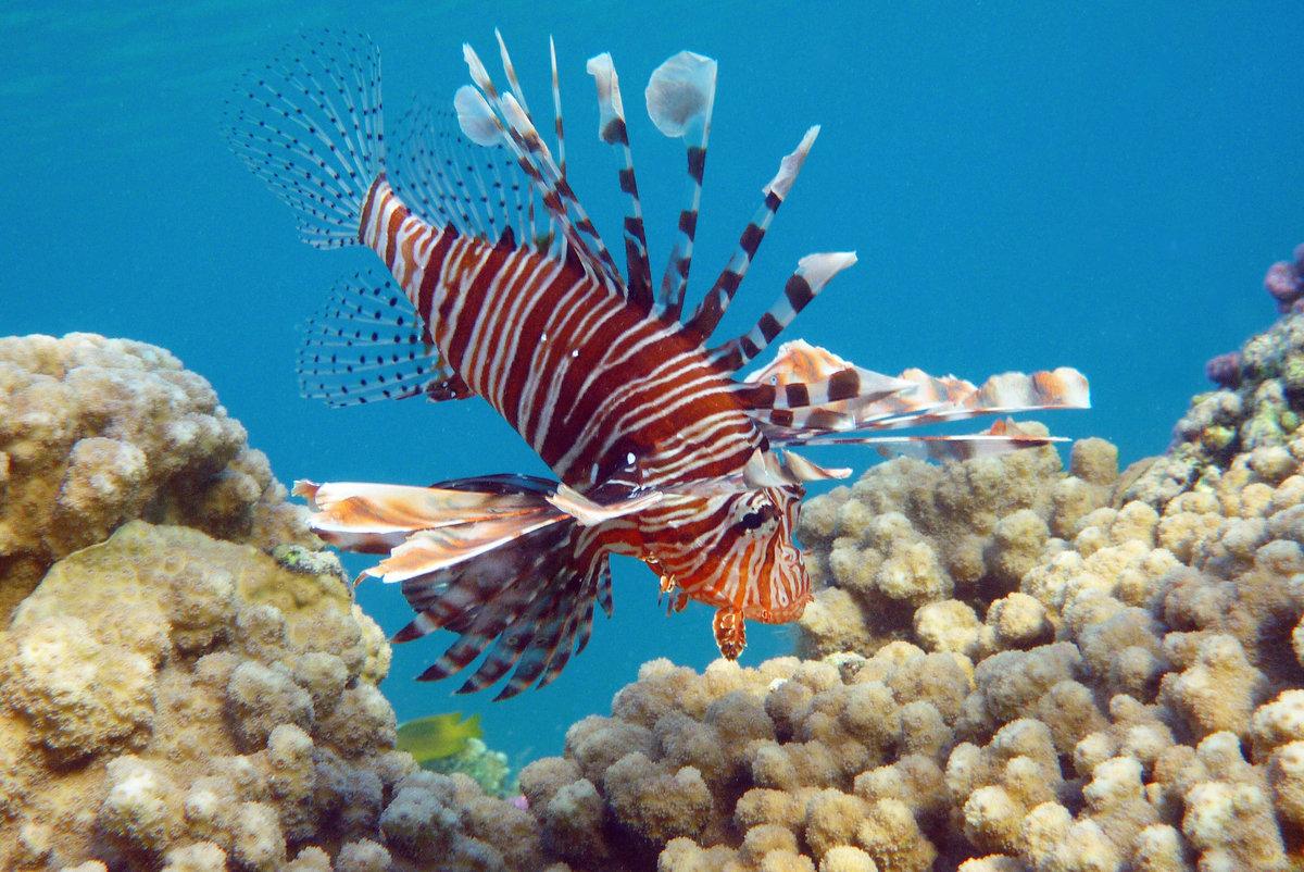 все рыбы красного моря фото и названия