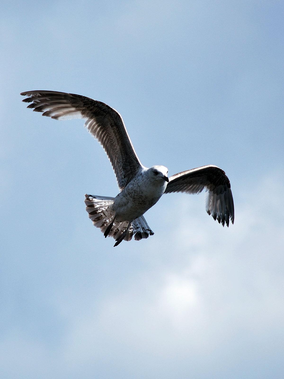 Картинки птицы в полете