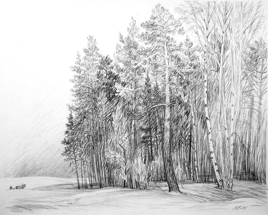 светильника картинки черный лес карандашом гибнут из-за