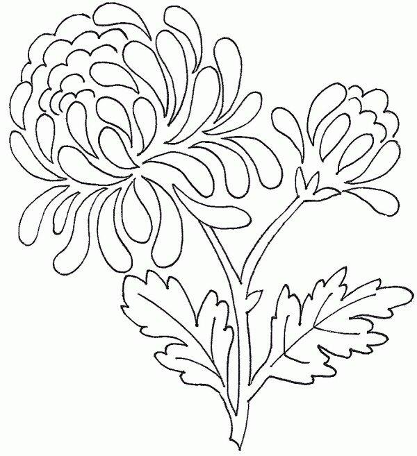 Фото хризантемы фотографии хризантем