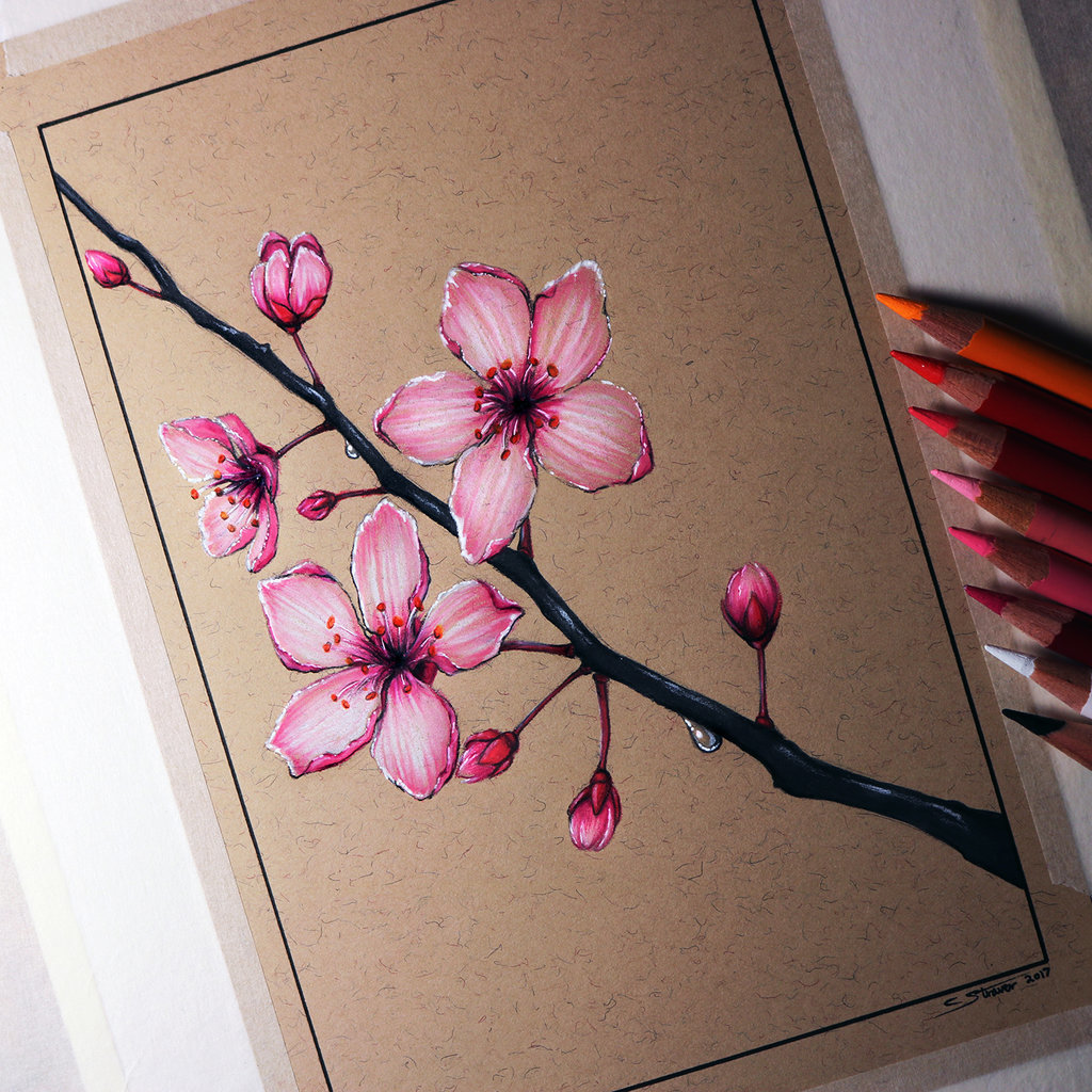 cherry blossom drawing - 894×894