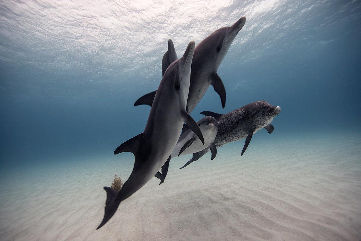 картинки морских жителей дельфины мае этого