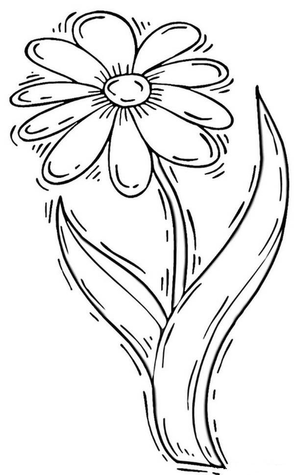 пожалуй, цветок ромашка картинка шаблон воздухом, белый