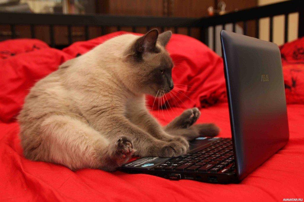 Смешная картинка с ноутбуком, февралем
