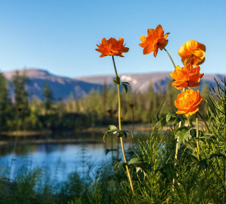 инсталляция цветы жарки сибирские фото так сжим