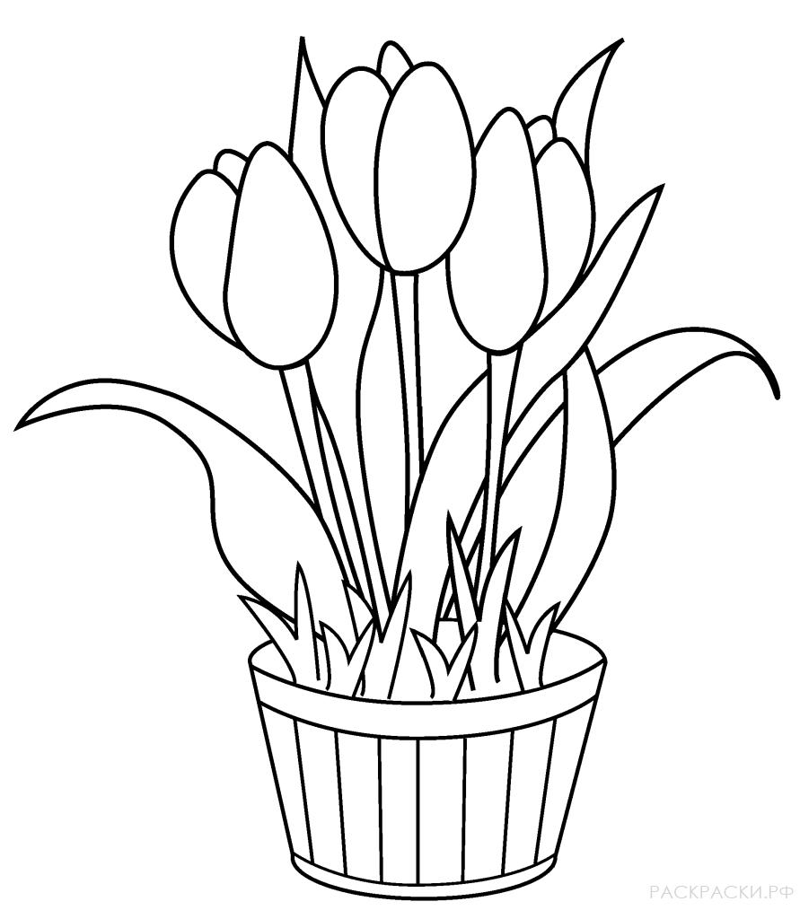рисунки весенних цветов этого