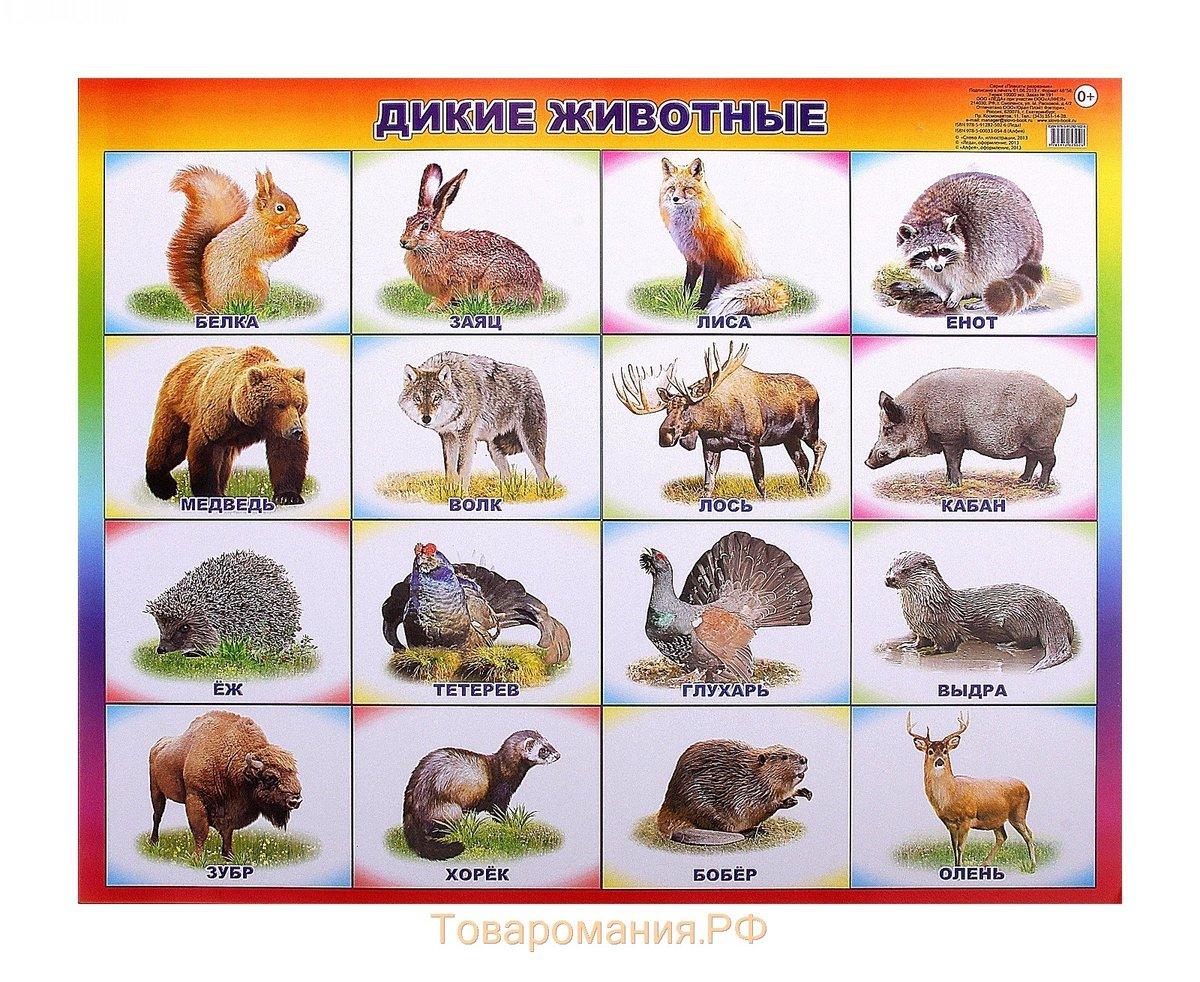 Картинки с животными и их названиями