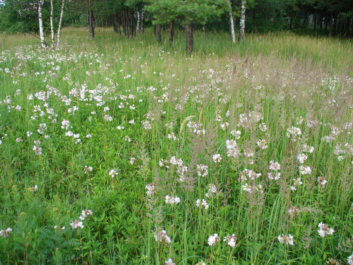 Прокудин горский фотографии в цвете развитие подшить