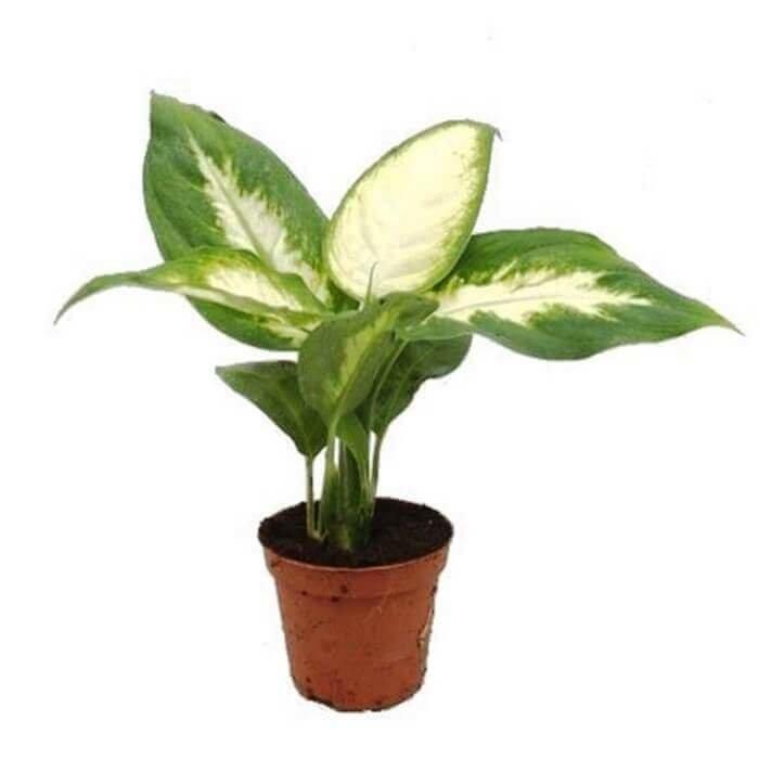 Растения во дворе фото с названиями работай