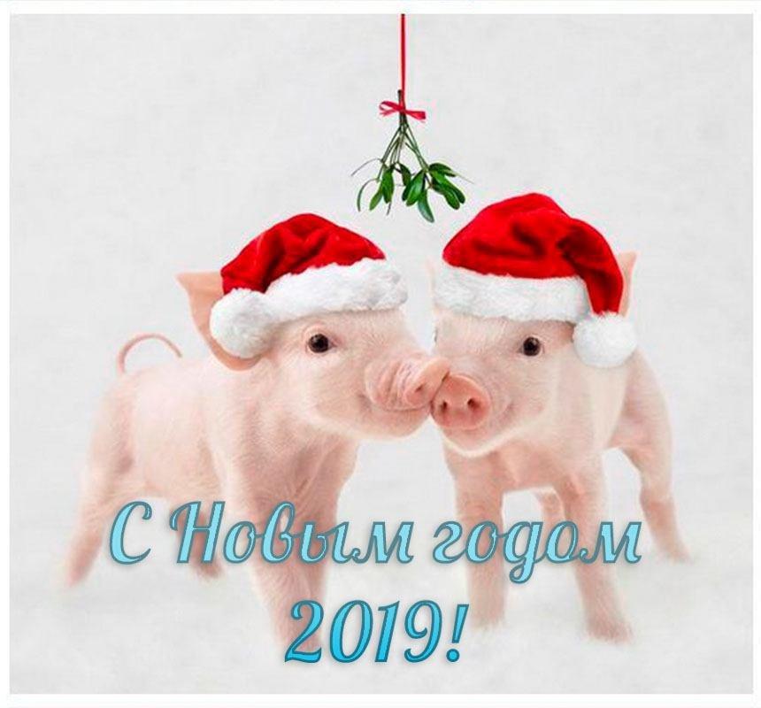 Новогодние картинки приколы с надписями 2019