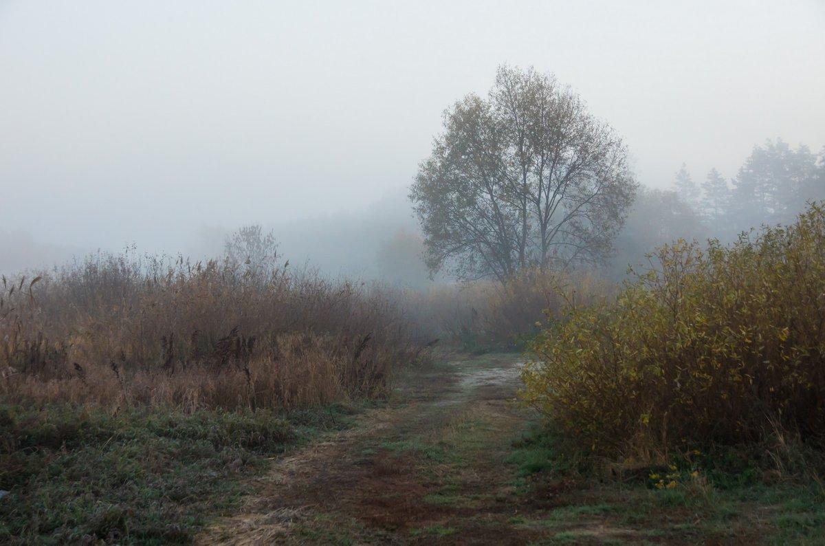 Предрассветные чертыпригород Воронежа, мкр Боровое, река Усманка#пейзаж #природа # утро #рассвет #луг #туман #лес #речка #Усманка