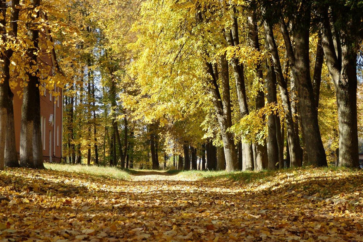 Картинки осенний листопад в парке, титанов приколы