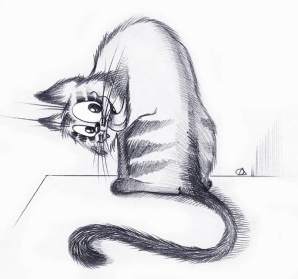 Про, прикольные картинки котов карандашом