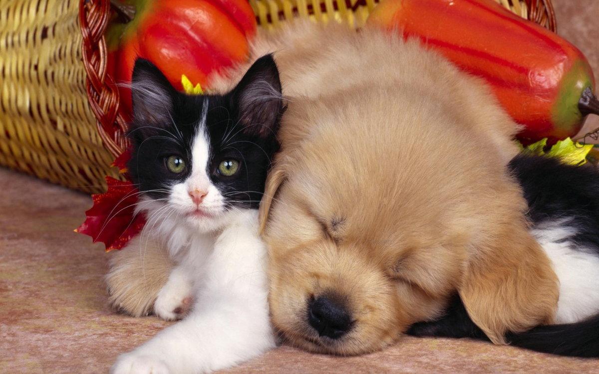 Прекрасно, картинки котят и щенят приколы