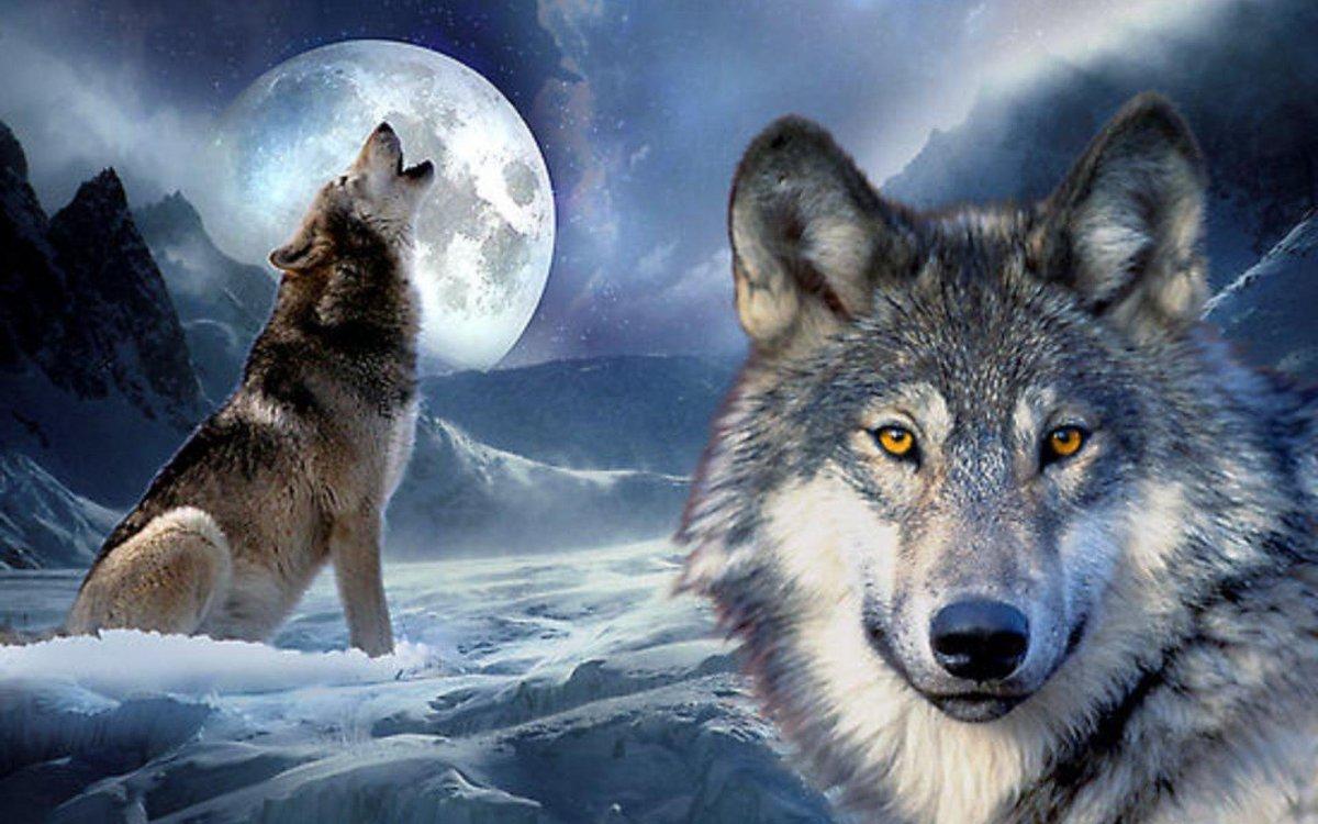 Живые картинки с волками, конституции дагестана открытки