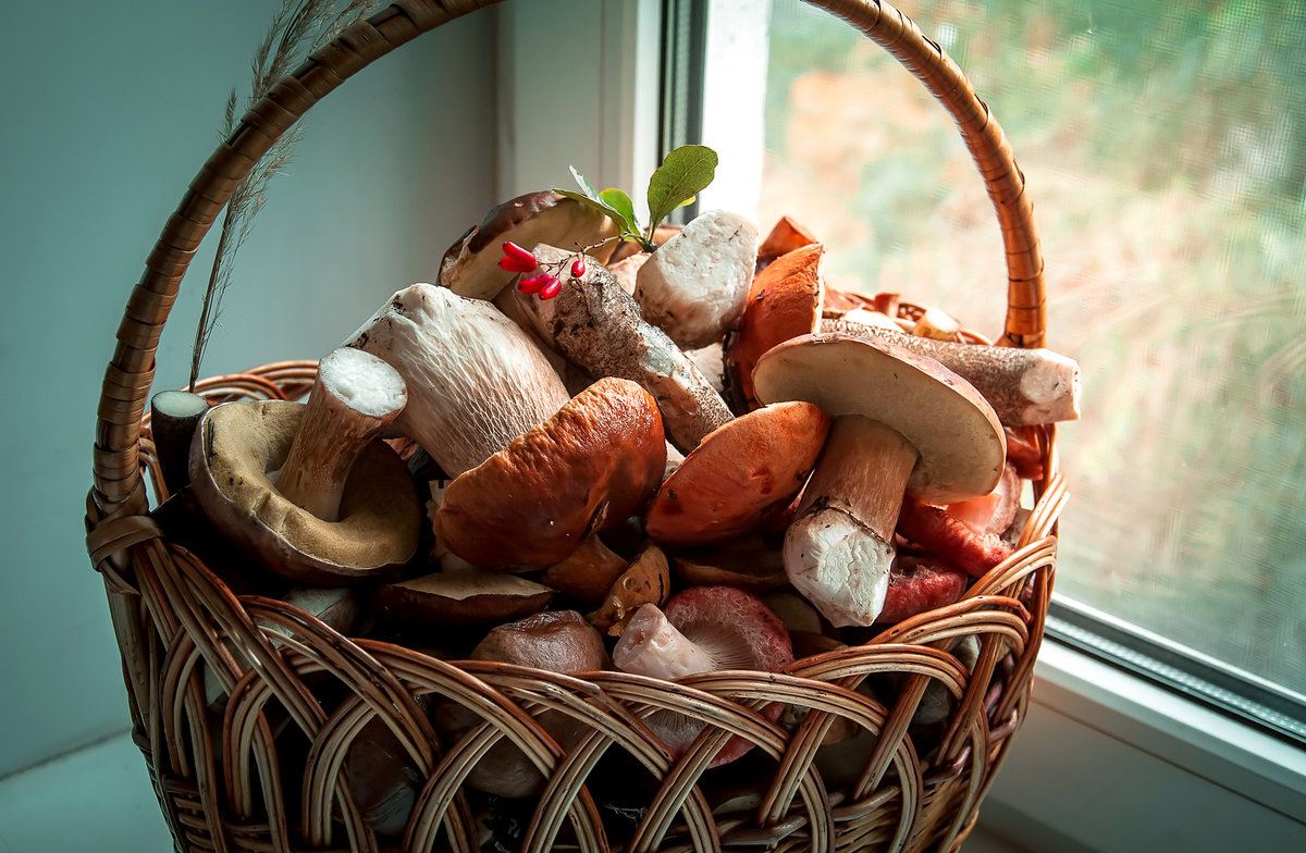 Смешную картинку, картинки лукошко с грибами