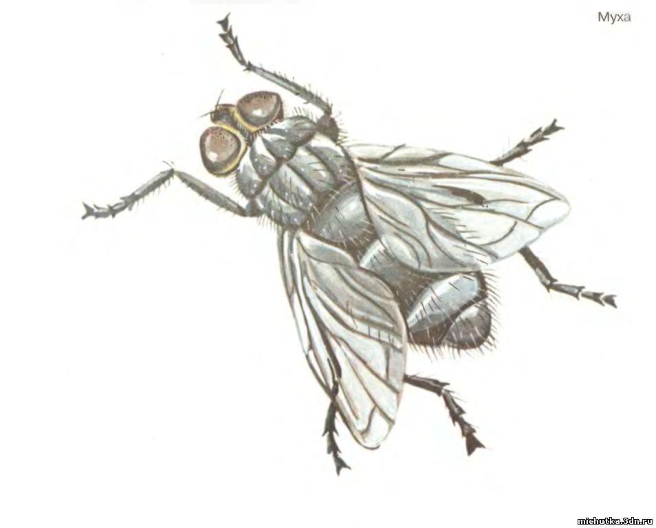 картинка комара и жука гибриды цветут