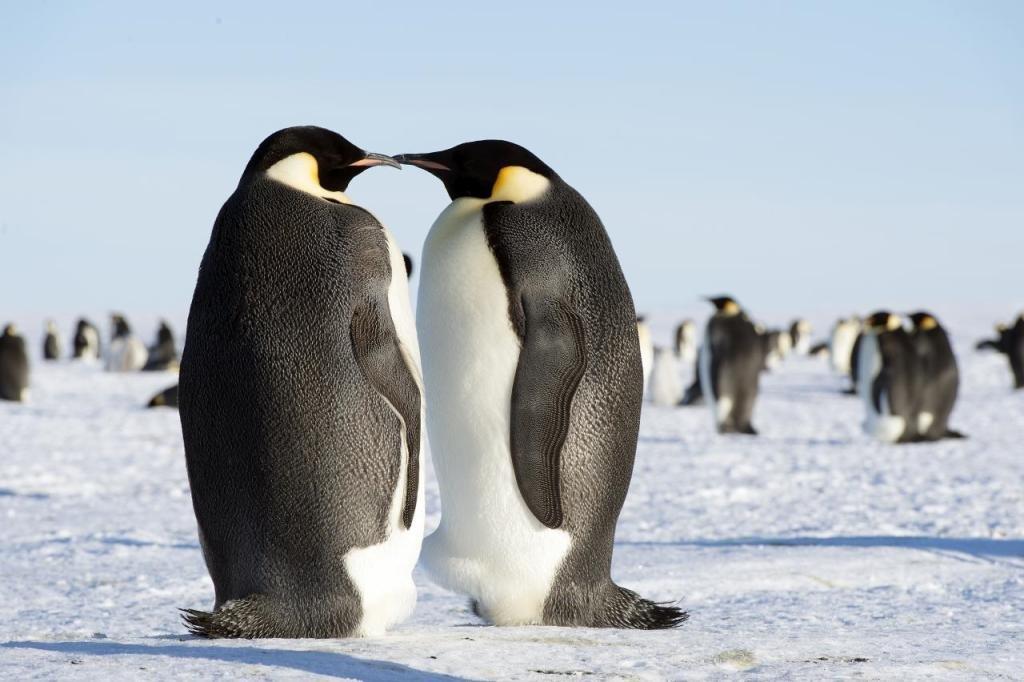Надписью, пингвины картинки красивые