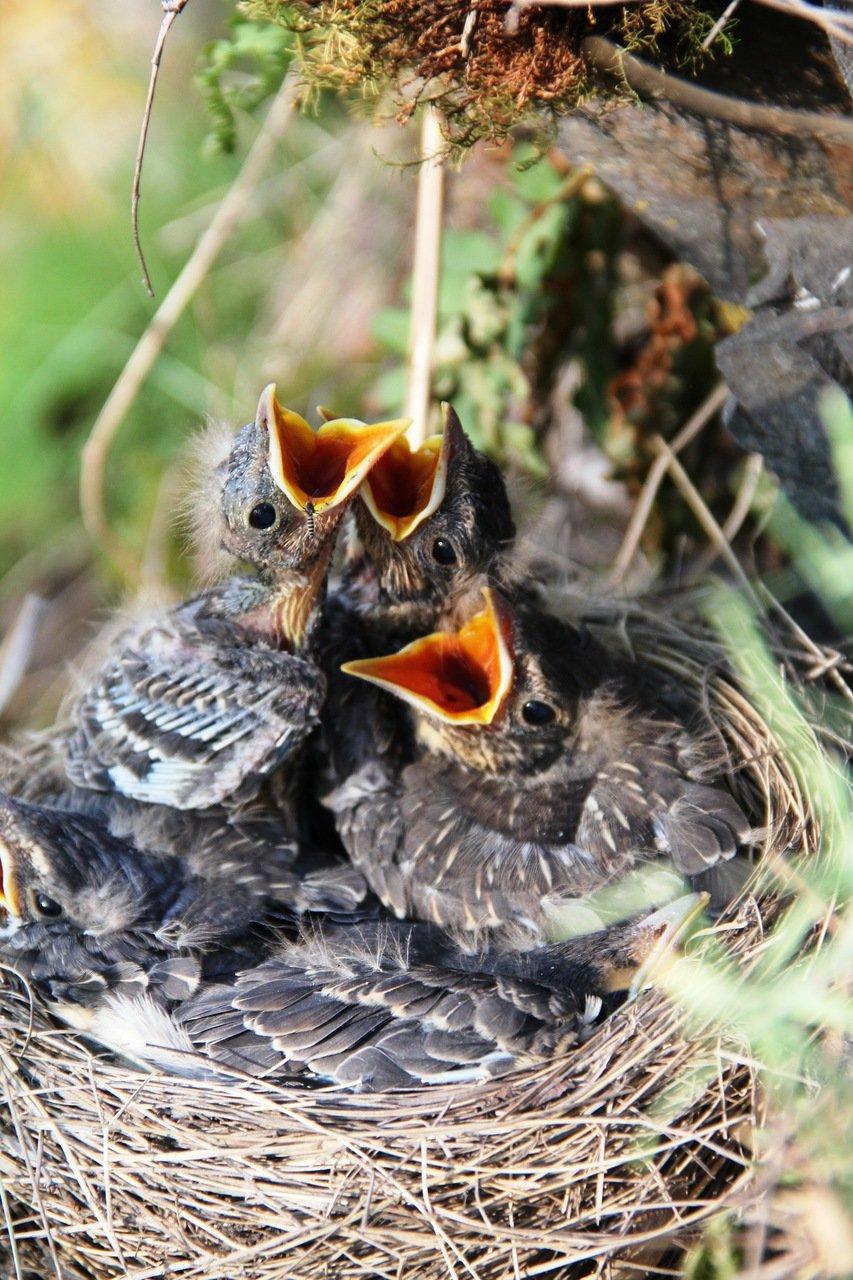 решили птицы их птенцы и гнезда картинки место