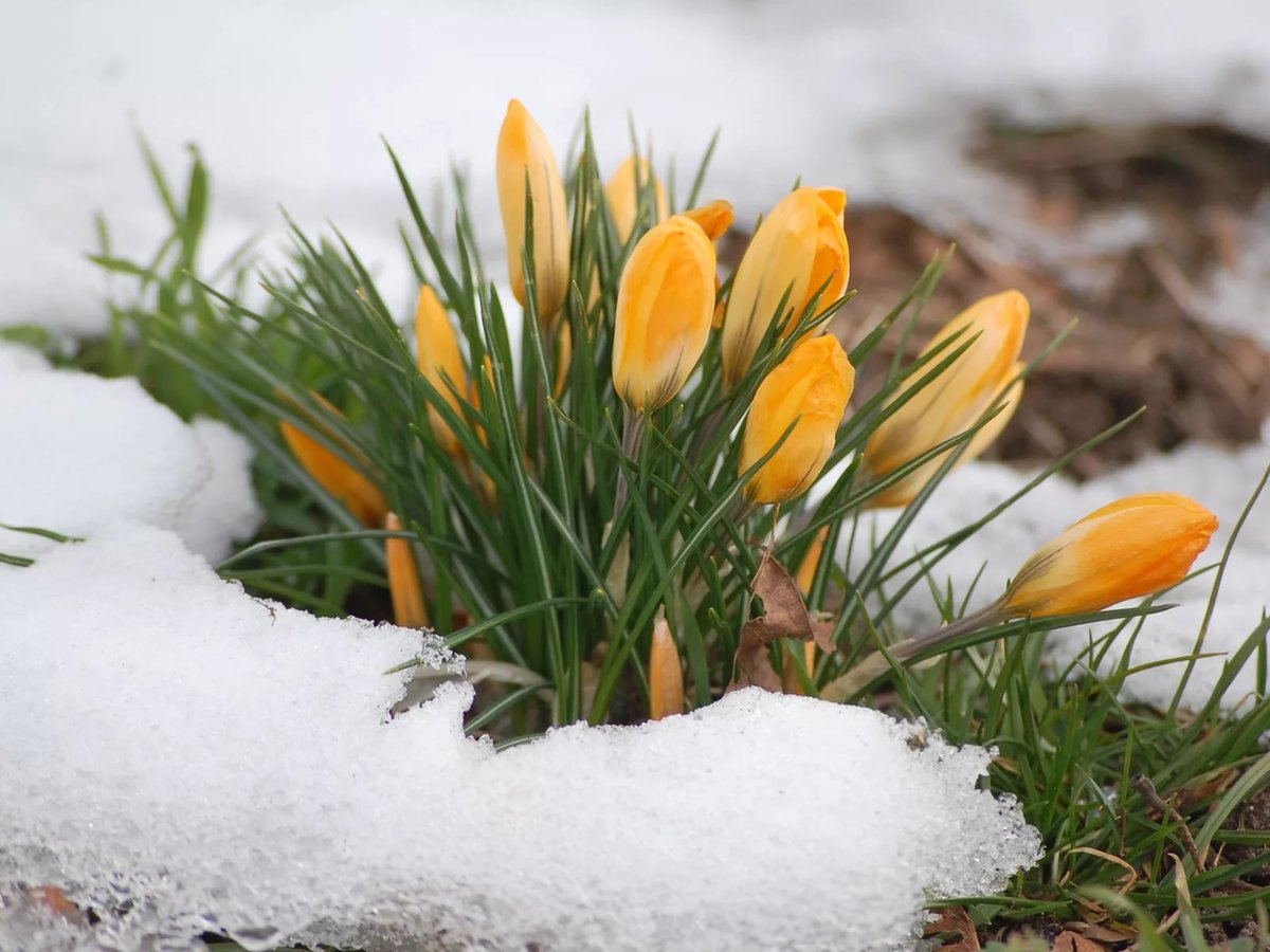 данным картинки преддверие весны очень красивый разносторонний