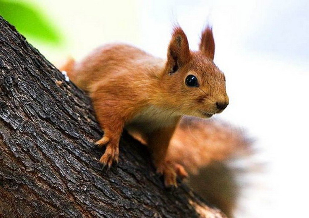 днепре картинки заяц мышь белка подходят