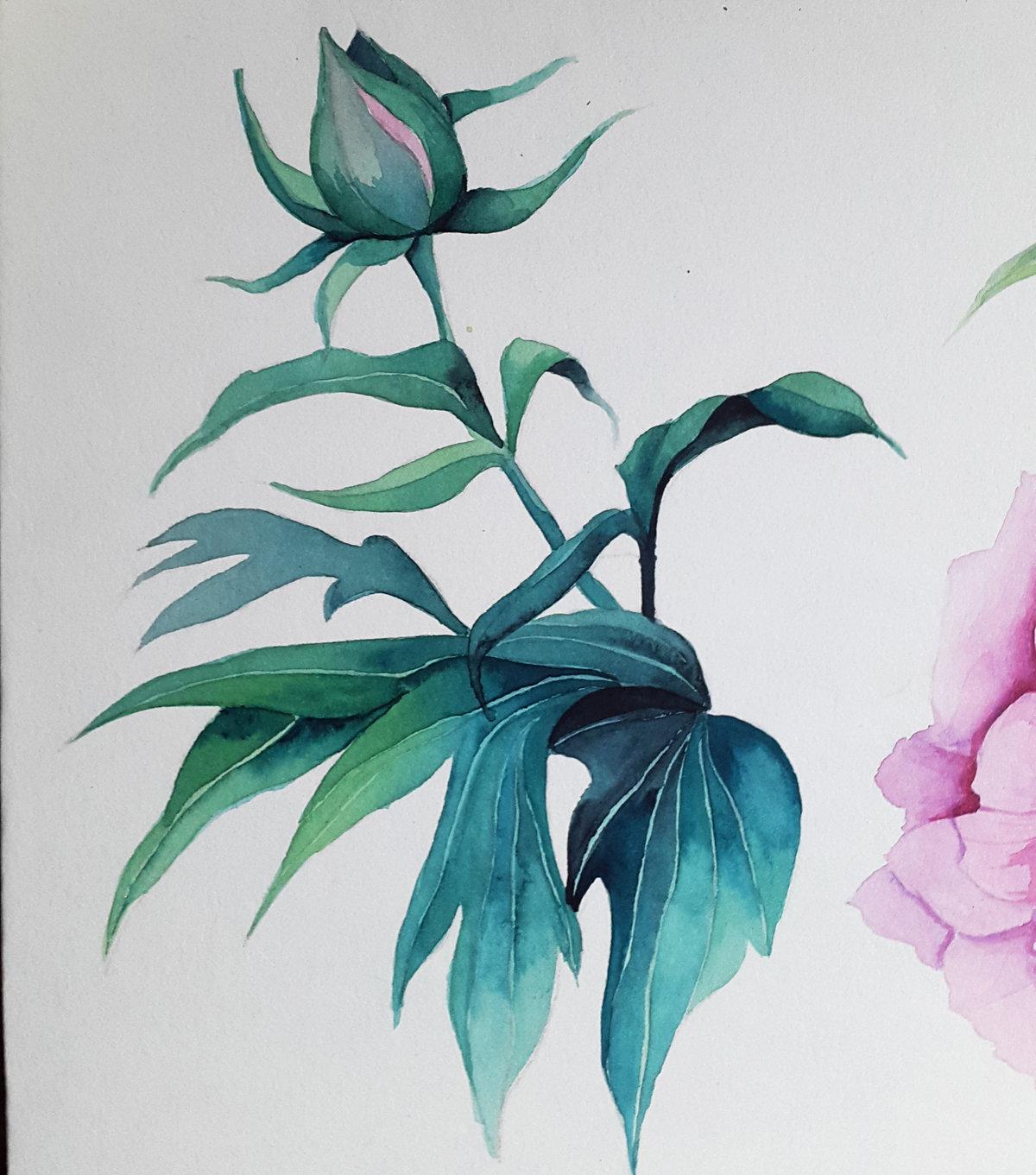 Цветы акварель картинки нарисованные, днем