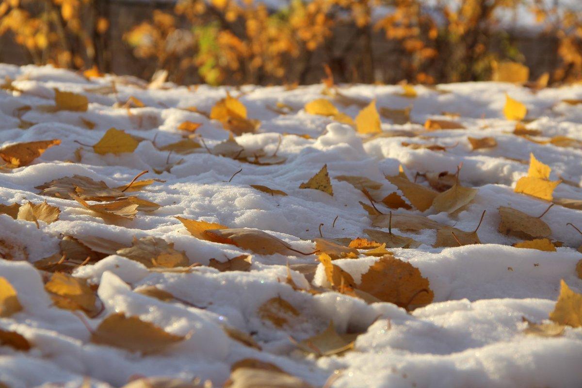 повторку фото снежный ноябрь применением