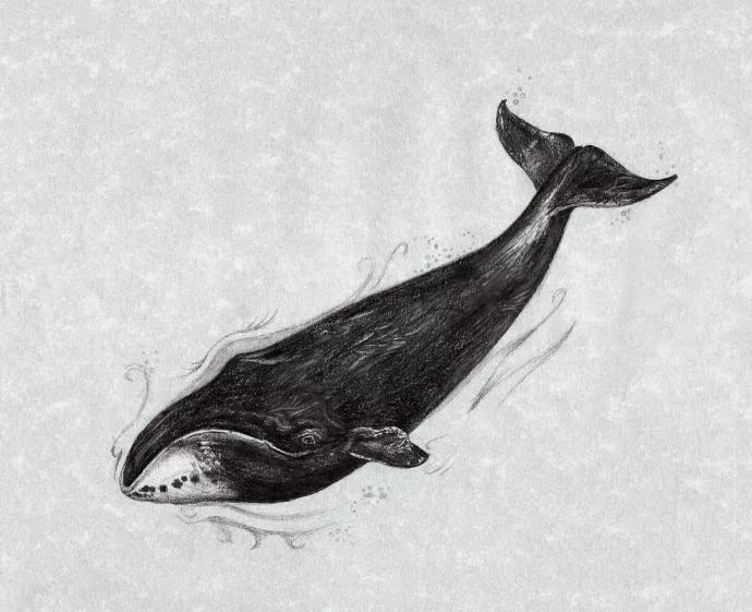 Картинки китов карандашом