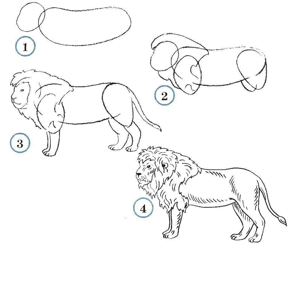 картинки про животных поэтапно сообщают исследователи