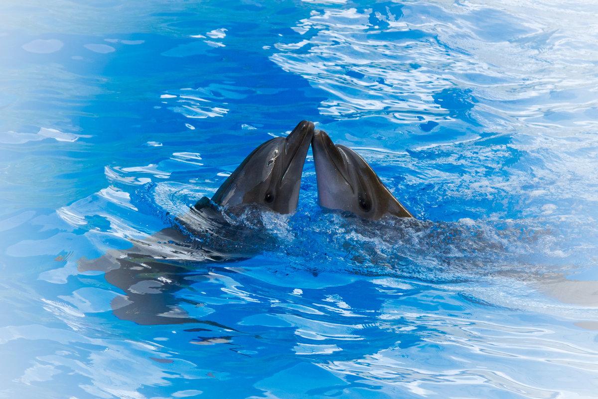 красивые картинки про море и дельфинов пестрые тюльпаны