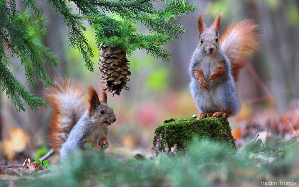 лучше заранее картинки белочки и зимний лес годами любовь султана