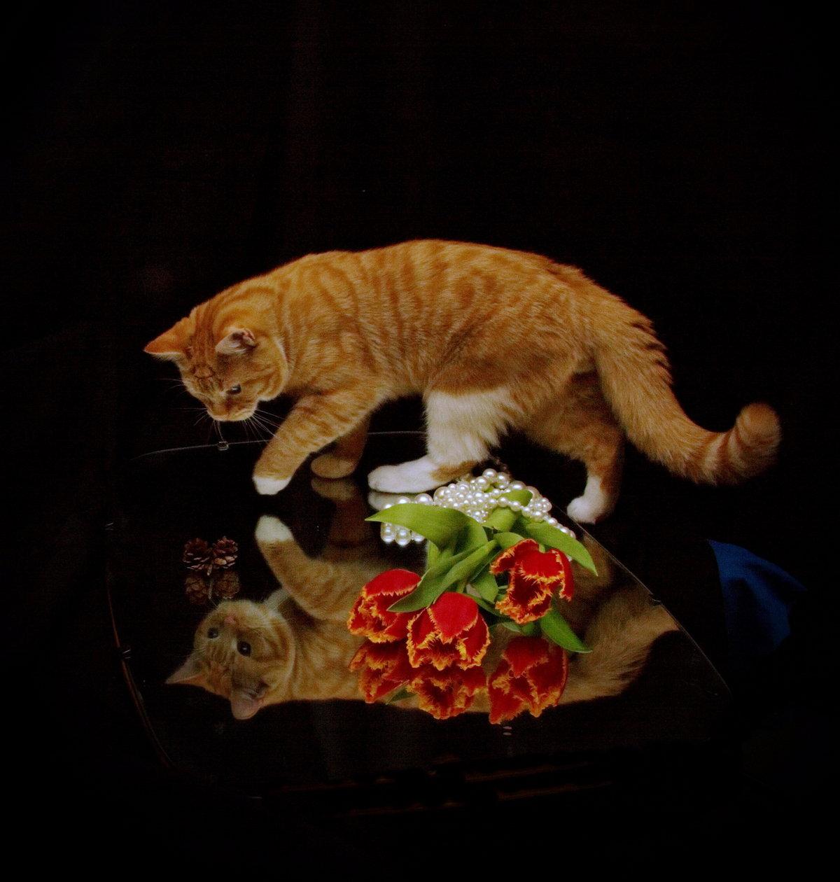 хорошего вечера кошки картинки дал