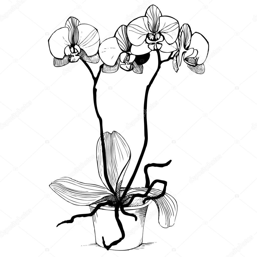 42 Black And White Orchid Tattoos Card From User Eudgeny In