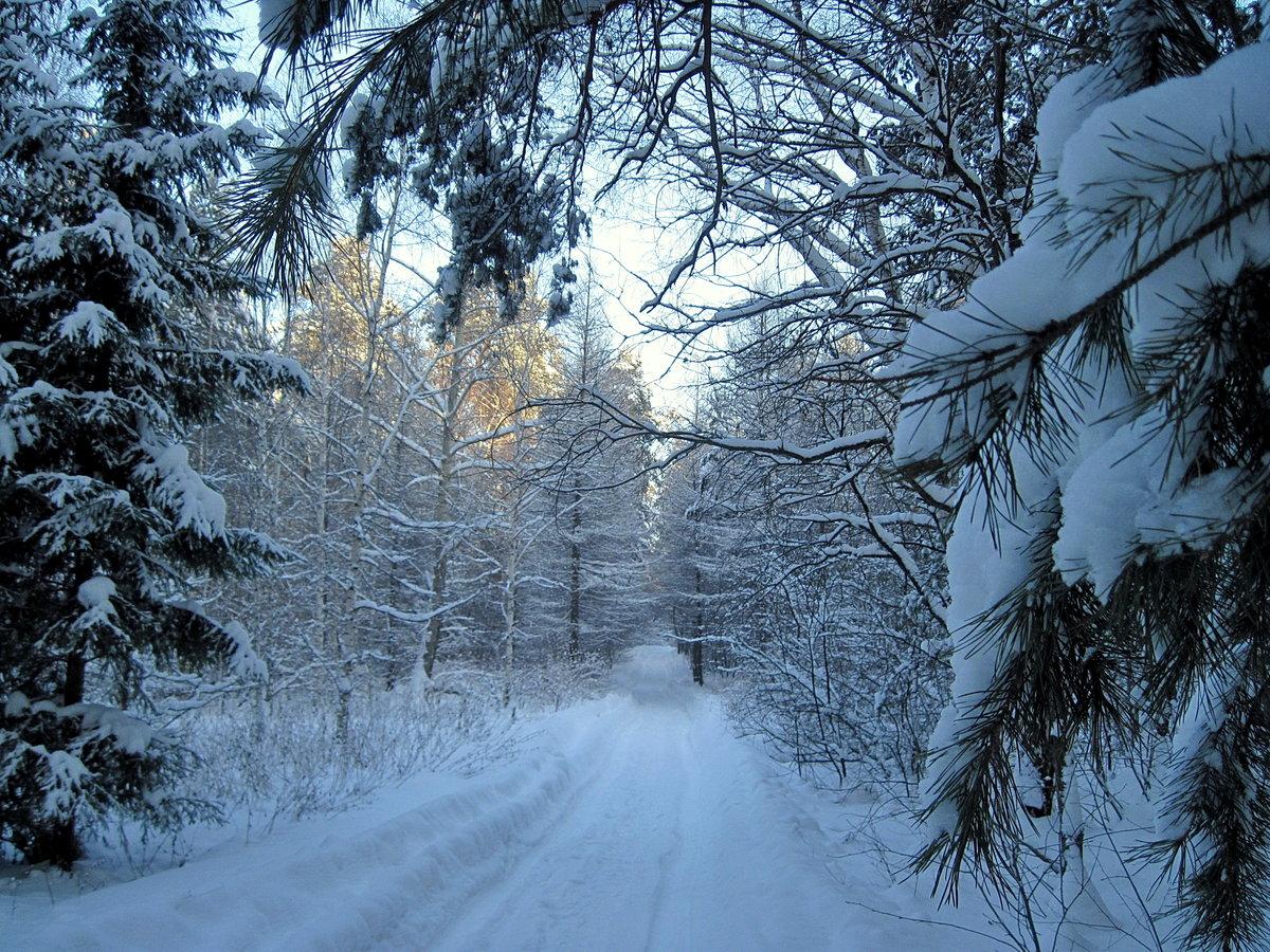 отделки картинки зимнего леса с дорогой это одно