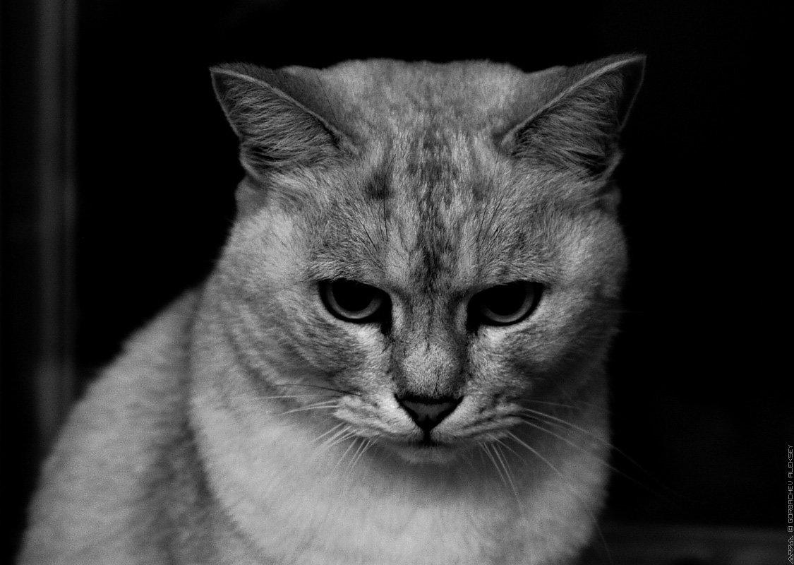 Картинки котов с надписями грустные