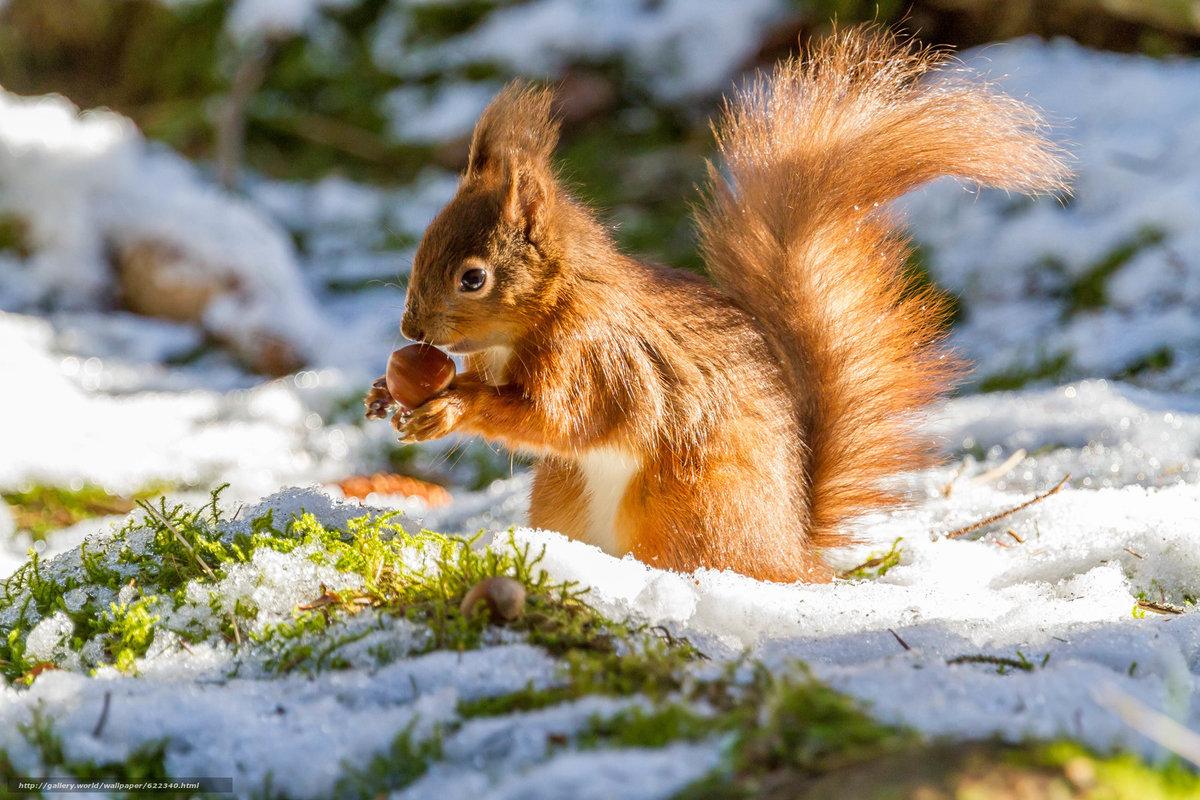 лесные животные фото новогодние боюсь