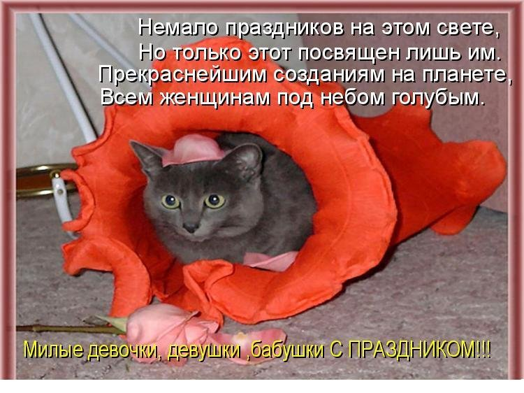 С 8 марта открытки кошка