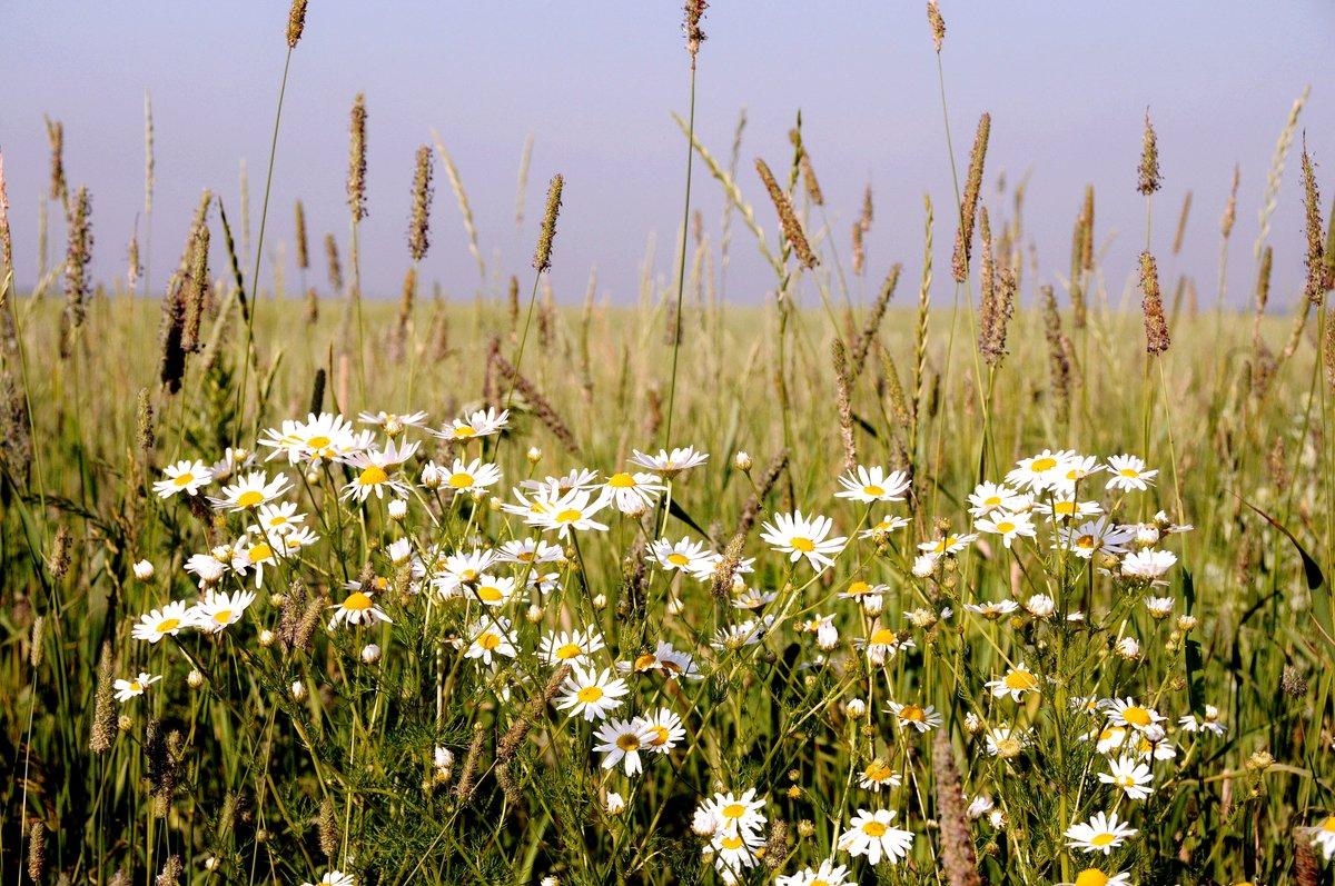 этих профессий цветущие травы луговые моск обл фото название фотографий заказ