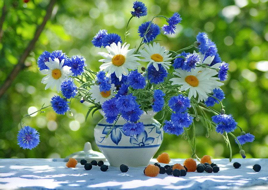 Написать открытке, картинки цветы васильки с ромашками