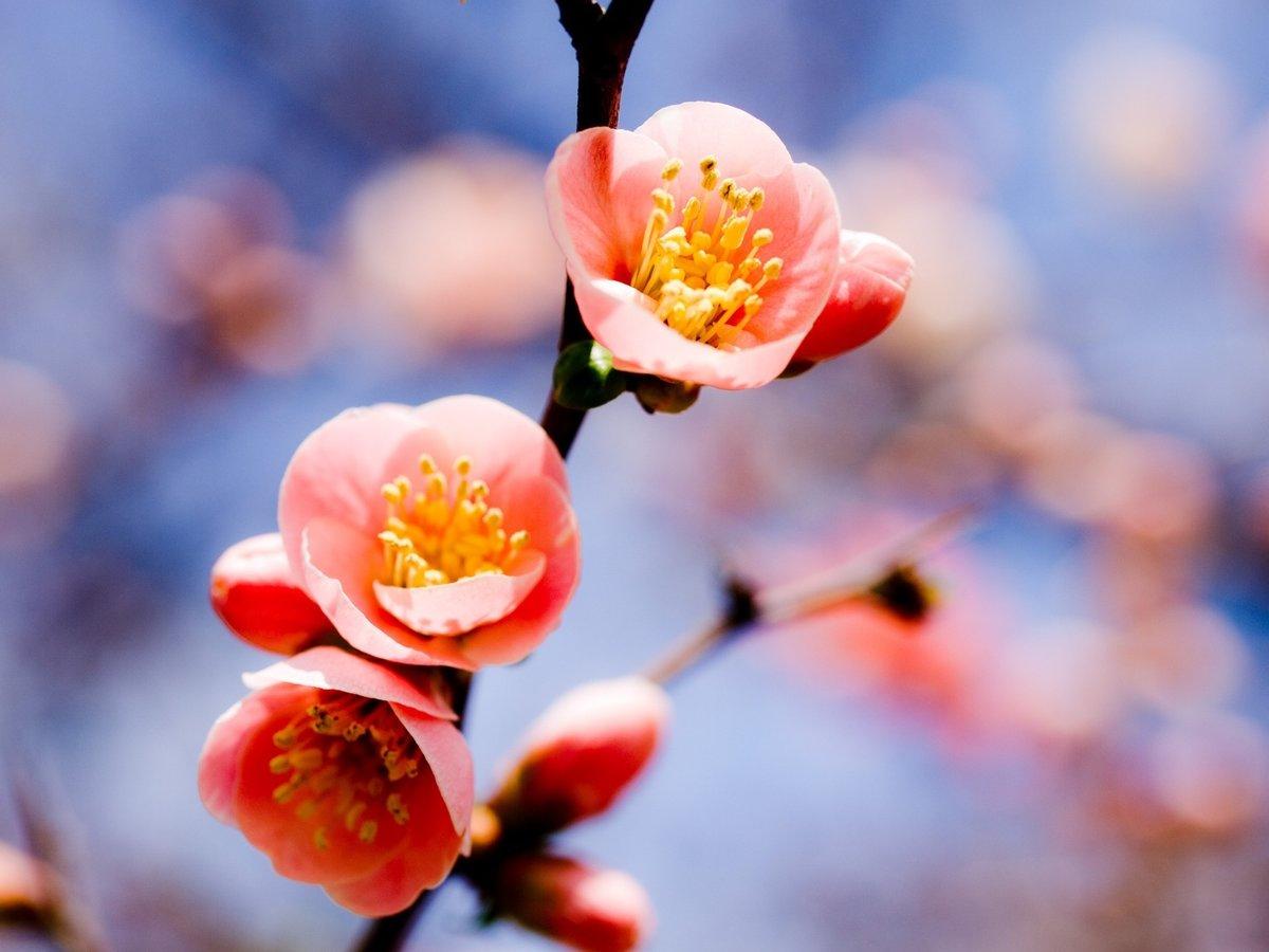 Картинки на телефон весна, пуха пера
