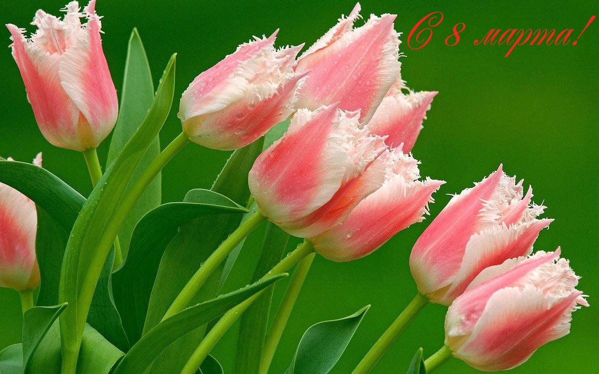 Весенние картинки с 8 марта красивые, английском языке